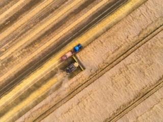dronographica høst majetærsker mark gul traktor korn harvest